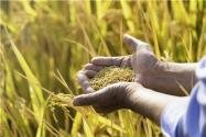 普通農民怎么貸款?最高能貸多少?