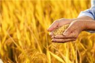 最新河南農民貸款政策是怎樣的?最多可貸多少?