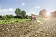農村將培育百萬創新創業帶頭人!有哪些扶持政策?你符合重點培育對象嗎?