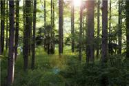 2020林权登记怎么做?重点把握这六方面!