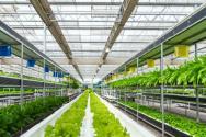 農村大棚種什么賺錢?蔬菜種植利潤高嗎?有沒有補貼政策?