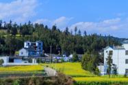 農村自建房最新政策有哪些?宅基地有何區別?