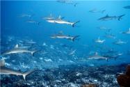 贵州发现80多种远古海洋生物化石!具体在哪发现的?包括哪些生物?附详情!