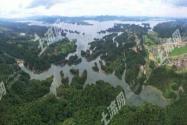 九江武宁县800亩有林地附带300亩湖地诚意转包!