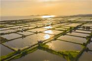 讓水產養殖和生態保護協調發展