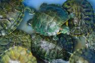 武汉大学生返校发现乌龟变龟壳!具体是怎么回事?事实真相是这样的!