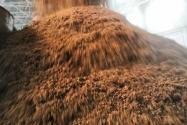 2020年糧改飼政策:補貼標準是多少?會給農民帶來哪些好處?