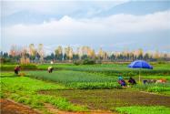 耕地非農化是什么意思?耕地非農化嚴禁這六種行為!