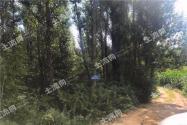 吉林省梅河口市1300畝超大林地轉讓!林權證齊全!