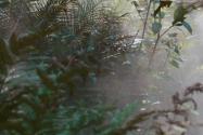 云南龍陵發現新物種高黎貢球蘭!具體長啥樣?在哪發現的?附詳情!