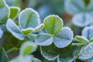 每年寒露是什么溫度?是幾月幾日?和白露有啥區別?