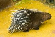 45種野生動物年底前停止養殖!具體是哪45種?有哪些新規定?附通知細則!