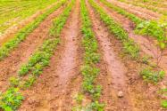 耕地和基本土地有哪些區別?耕地的保護政策有哪些?