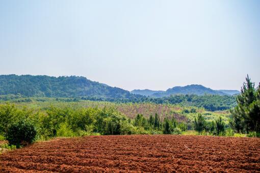想承包土地去哪里找-摄图网