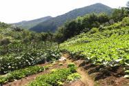 投資農業項目前景好嗎?為什么會出現十個項目八個死的局面?