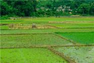 沈陽農業結構升級鎖定四大領域