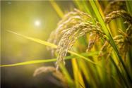 2017農村改革土地將流轉承包,糧食直補錢最終歸屬權該給誰?