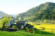 山東日照:建設特色小鎮 助推鄉村振興