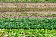 綠色有機農業發展前景如何?投資得注意幾個問題