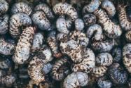 黃粉蟲真正的利潤是多少?養黃粉蟲掙錢嗎?