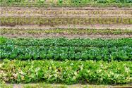 懶人菜種植大全有哪些?這七種蔬菜種下去不用管!