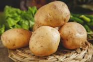 水培土豆的步驟有哪些?要注意什么?