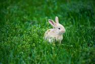 養兔子利潤怎么樣?2021年養兔行情怎么樣?