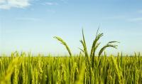 農村城鎮化,農民會失去土地嗎?