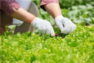 這個農業補貼比糧食直補高10倍!快看你符合申請條件么?