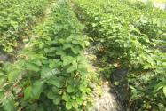 打工仔回鄉創業建農業采摘園年入超100萬元