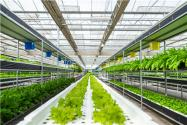 為何出現投資農業項目十個項目九個失敗現象?未來最熱農業投資項目有哪些?