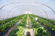 立體農業是什么?它有哪三大模式?效益如何?(附投資成功案例)