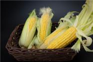 地膜早糯玉米種植時間是什么時候?附糯玉米種植技術!