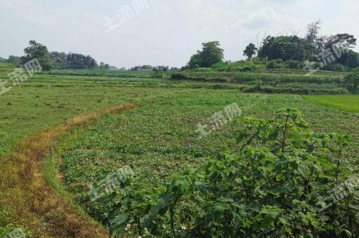 同一塊土地,看農民如何增收60倍!