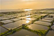2021承包魚塘掙錢嗎?魚塘養殖什么魚最賺錢?