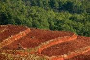 常說的農用地和耕地的區別是什么?農用地包括哪些地類?