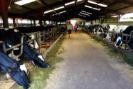 農用地上建的養殖場是否違建?建養殖場需要哪些手續?