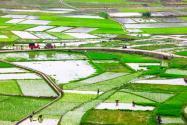 2021年基本農田可以搞養殖?可以建蔬菜大棚嗎?