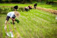 2018年投資農業或將讓你賺得盆滿缽滿!可以發展什么項目致富呢?