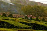 國家準備取消火葬是真的嗎?2021年農村土葬新規來了!