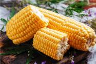 玉米價格還會持續上漲嗎?玉米價格為什么上漲?