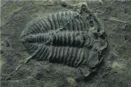 貴州發現2.44億年前大型盤州暴魚!具體怎么回事?長什么樣子?