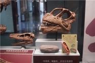 江西工地挖出6600萬年前恐龍蛋化石!具體什么情況?恐龍蛋長什么樣?
