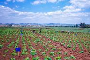 2021年海南省示范家庭農場注冊條件及申報材料有哪些?
