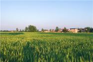 2021年第七批農業產業化國家重點龍頭企業申報開始!怎么申報?附申報條件!