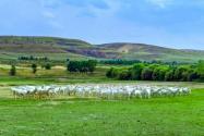 內蒙古草場一畝多少錢?承包期限是多久?