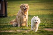 警校售淘汰犬最高拍出33萬!淘汰警犬一般多少錢一只?