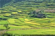 河南省耕地多少錢一畝?河南適合種植什么農作物?