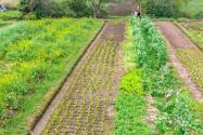 安徽省耕地大概多少錢一畝?適合種植什么農作物?