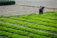 天津市耕地多少錢一畝?耕地類型以什么為主?